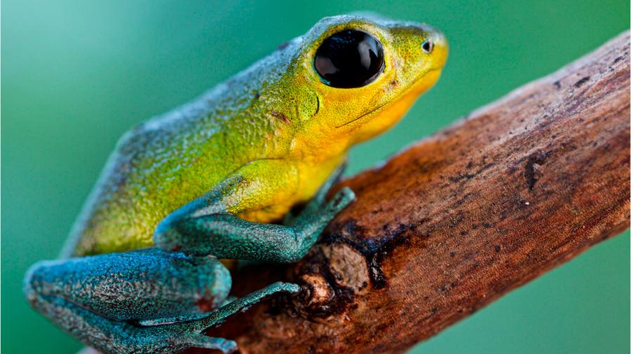 Los genes de 10 especies de vertebrados los transformaron en monógamos