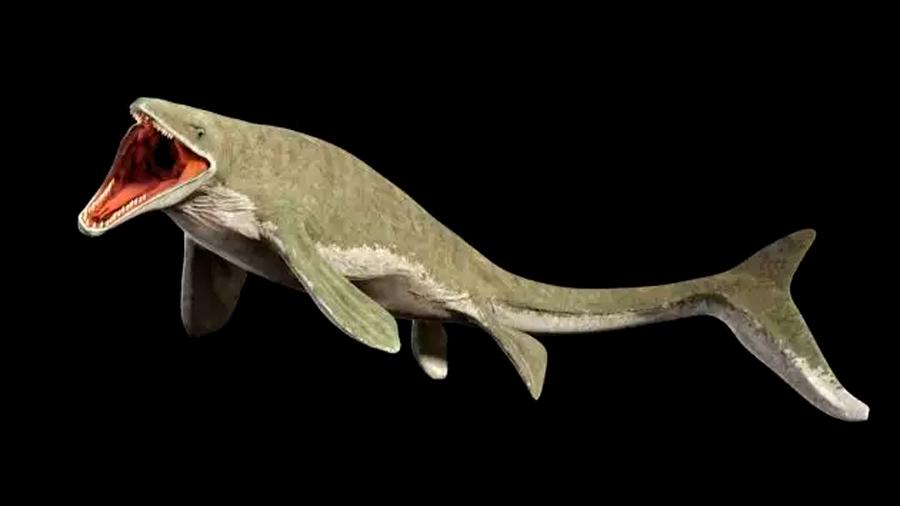 Descubren espécimen de Basilosaurus isis, un depredador marino extinto que devoraba ballenas