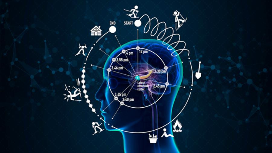 Identifican la zona del cerebro que experimenta el tiempo