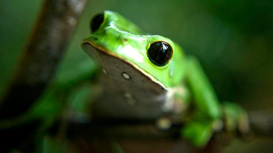 La interferencia en las comunicaciones podría ser evitada por un sistema inspirado en las ranas