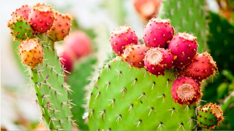 Adolescente mexicana desarrolla una bebida que combate la diabetes