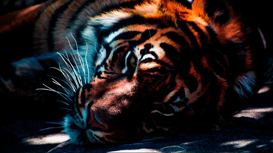 Un modelo matemático puede salvar a las especies amenazadas