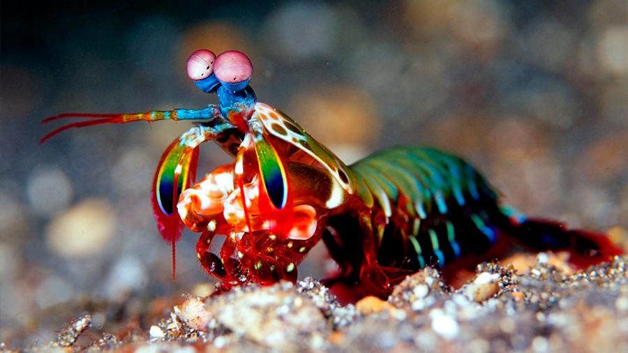 Los coches autónomos aprenderán a ver mejor gracias a este crustáceo