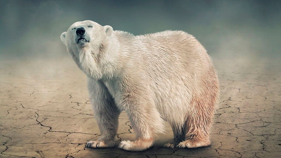 Científicos se inspiran en pelo de oso para crear una membrana nanoestructurada que desale agua