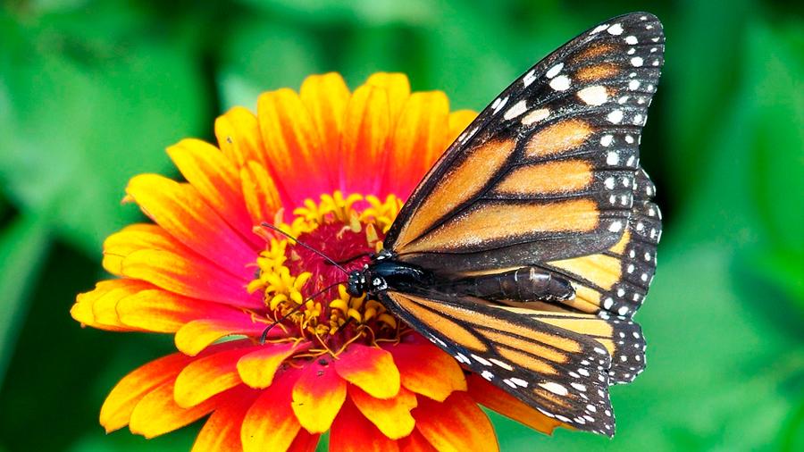 Las flores pueden escuchar a los insectos, comprueba estudio