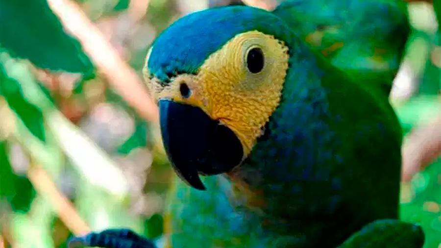 Cientos de especies animales en riesgo están fuera de la Lista Roja