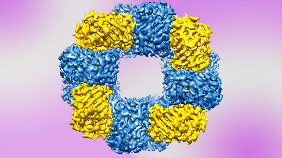 """""""Convencen"""" a una proteína para que forme estructuras sintéticas"""