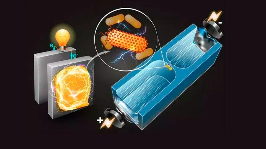 Investigadores descubren bacterias que producen electricidad natural