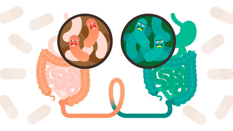 La microbiota intestinal: el inicio de una revolución científica y biomédica