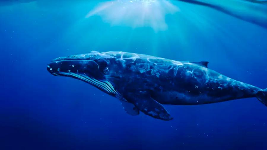 """Al menos 15 """"melodías"""" distintas son identificadas en el repertorio del canto de ballenas jorobadas"""