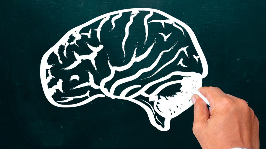 Investigadores descubren vías cerebrales vinculadas a conductas impulsivas