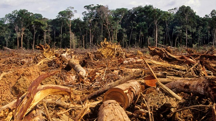 La desigualdad social promueve la deforestación en América Latina