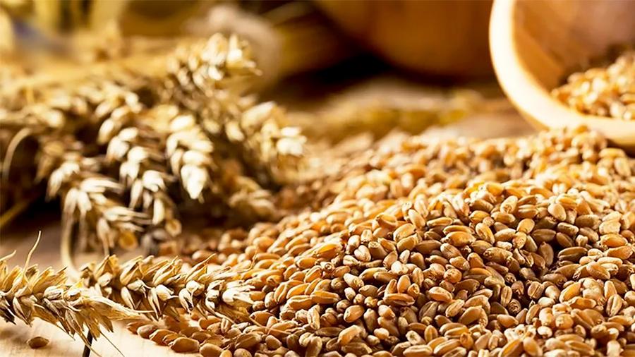 Crean universitarios suplemento nutricional de bajo costo