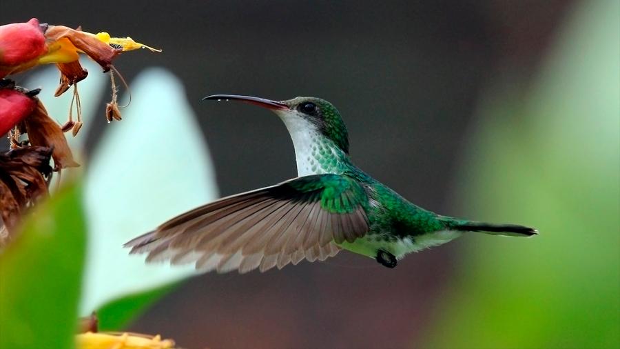 Los ecosistemas podrán restaurarse aplicando la ingeniería de la biodiversidad
