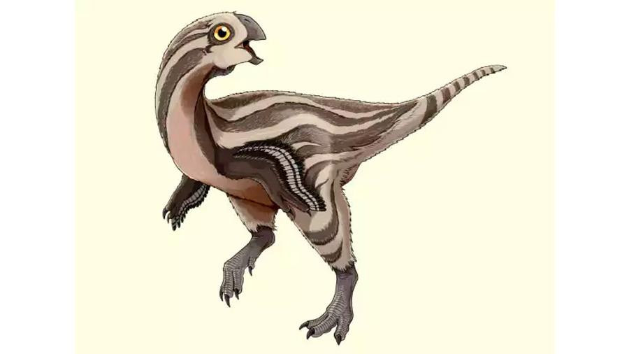Descubren nueva especie de dinosaurio con plumas en Mongolia