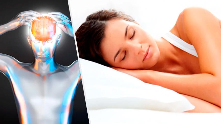 Los mecanismos y procesos del sueño