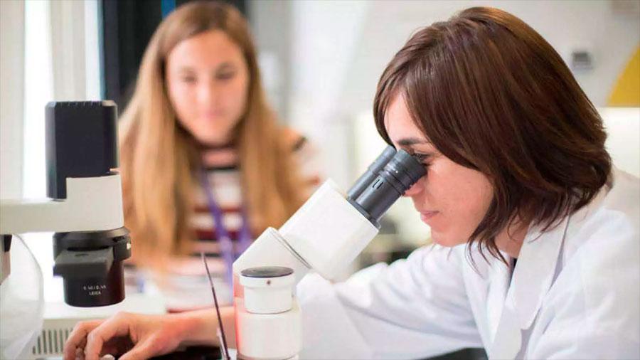 Científicos españoles crean 'minirriñones' vía células madre en tan solo 20 días
