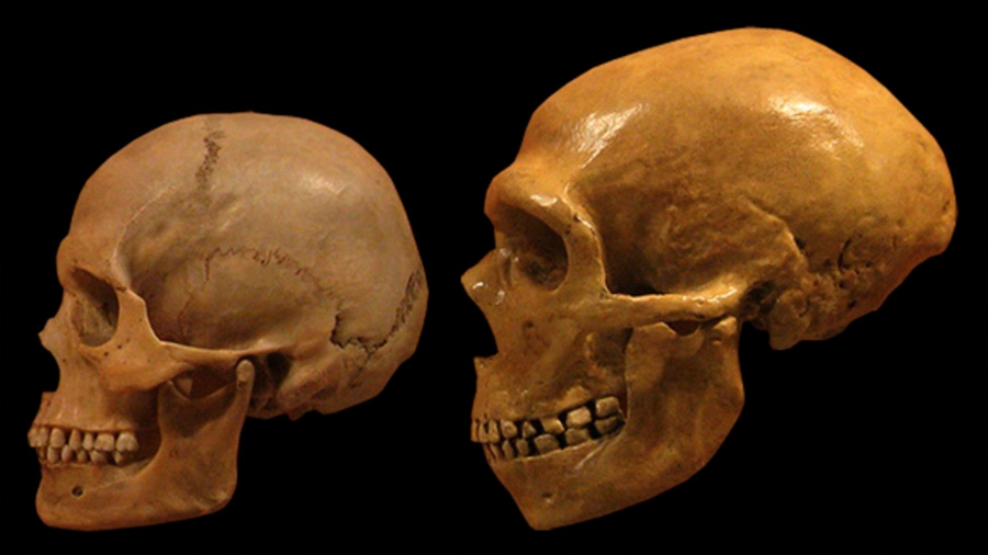 Isótopos en huesos indican que los neandertales comían carne fresca