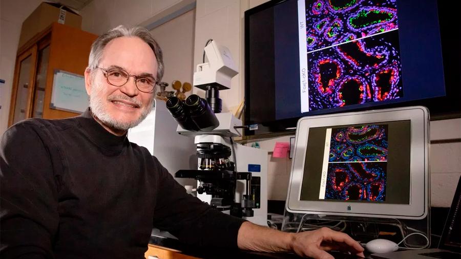 Descubren que los cilios no solo transportan al esperma, sino que le mantienen bailando