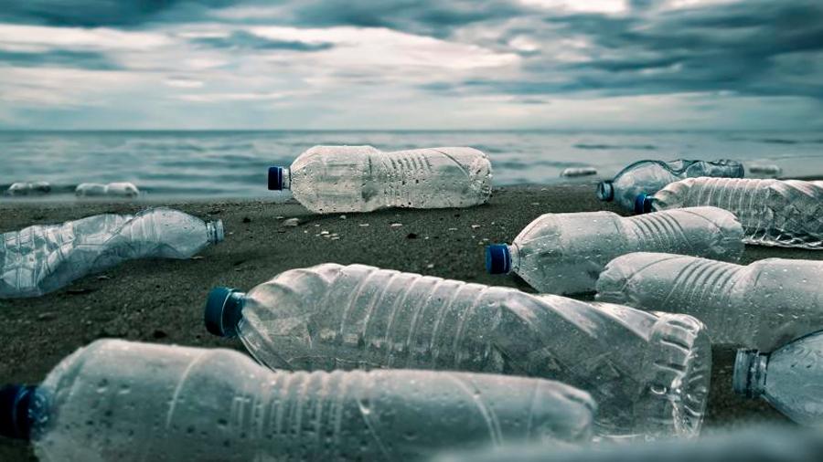 Biocompuestos, hongos y bacterias luchan contra el plástico