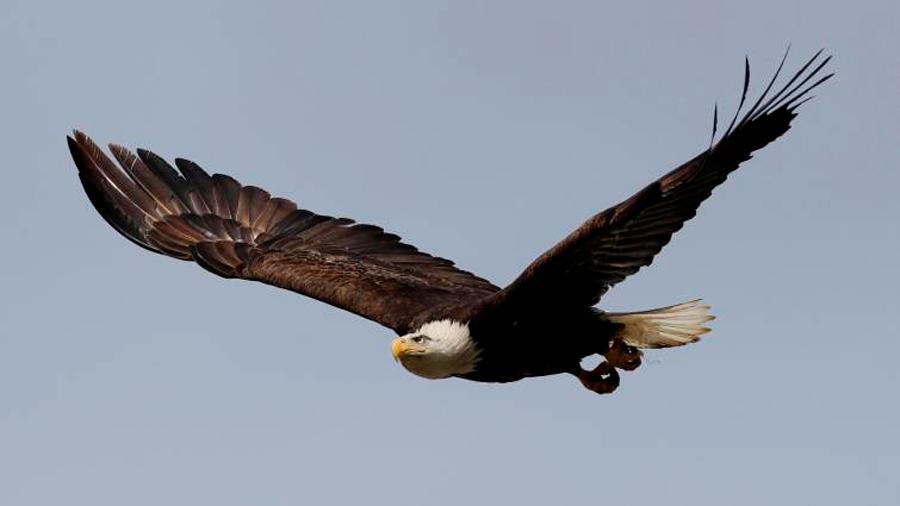 Descubren el secreto de las plumas de las aves