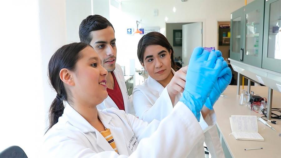 Mediante biología sintética, estudiantes modifican probiótico para tratar depresión y ansiedad