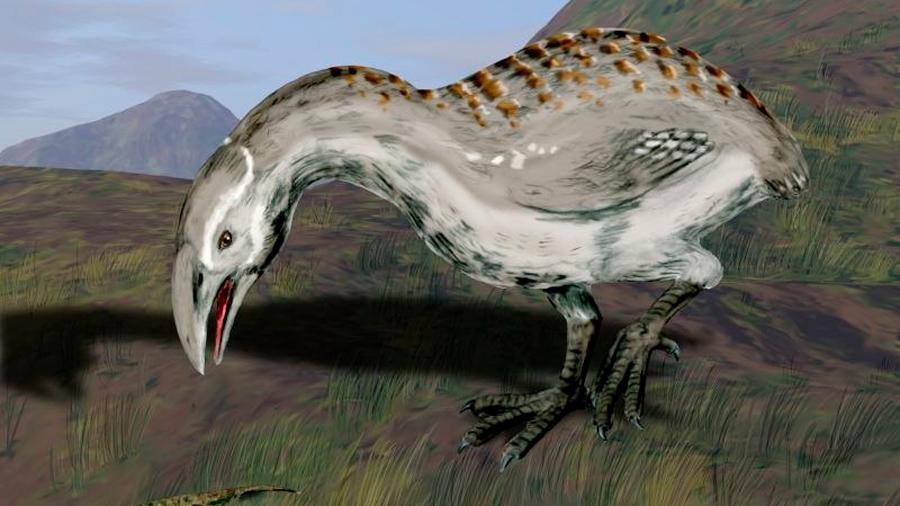 Antepasados de misteriosa ave gigante llegaron volando desde África hasta Nueva Zelanda