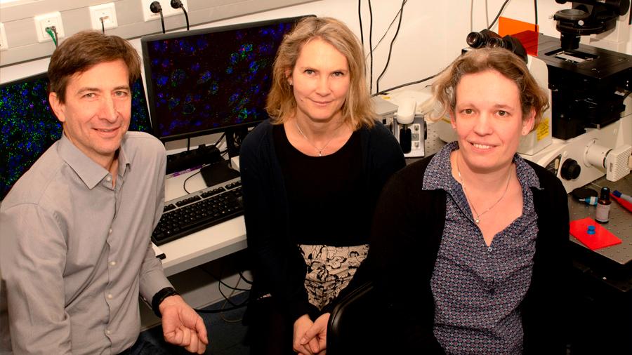 """Descubren que un ataque de epilepsia ocurre al atrofiarse el """"sistema de frenado ABS"""" del cerebro"""