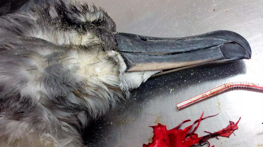 Los globos son los desechos plásticos marinos más letales para las aves