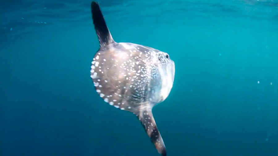 Encuentran una especie marina nunca antes vista en América del Norte