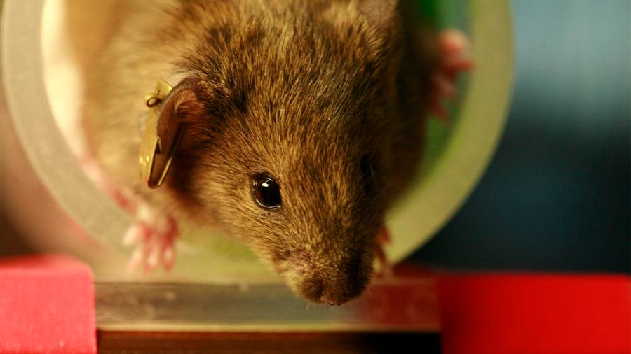 La nanotecnología permite a los ratones ver en infrarrojo