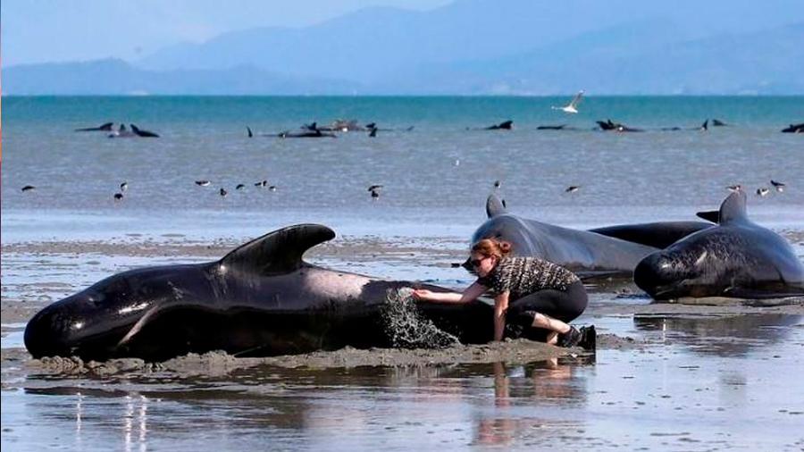 Científicos recurren a drones para vigilar la salud de las ballenas