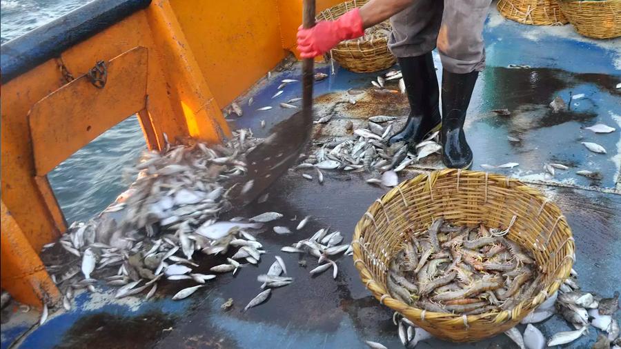 El Calentamiento Global reduce un 4 por ciento las capturas pesqueras