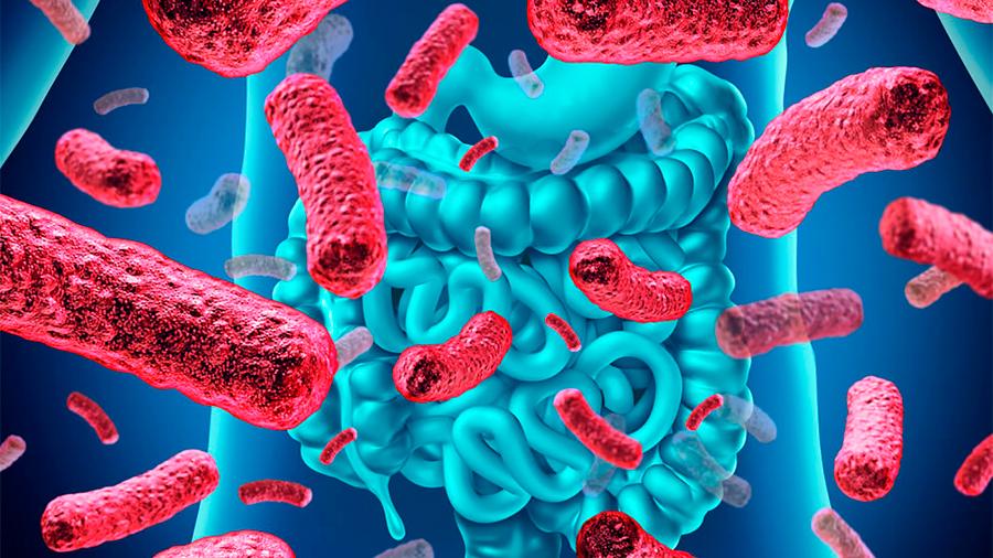Científicos mexicanos estudian en menores obesos el efecto de la fibra en el equilibrio de glucosa