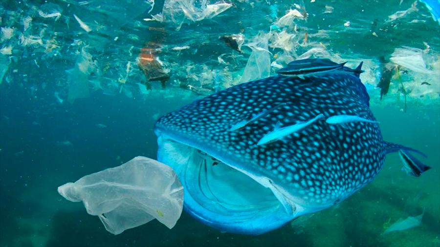 Estudio: 72 % de criaturas consume plásticos en los océanos