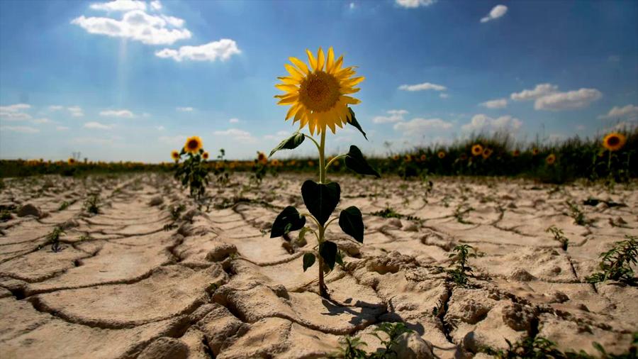 """Organizaciones ecológicas de Francia demandan al Estado por """"inacción"""" ante el cambio climático"""