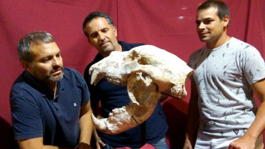 Científicos hallan fósil de oso gigante que vivió hace 700,000 años en Argentina