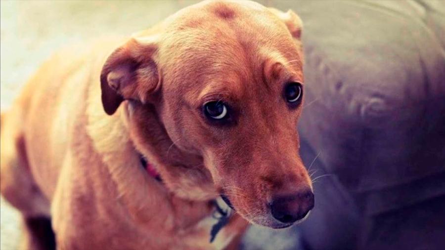 Más que culpa, los perros sienten miedo cuando los regañas