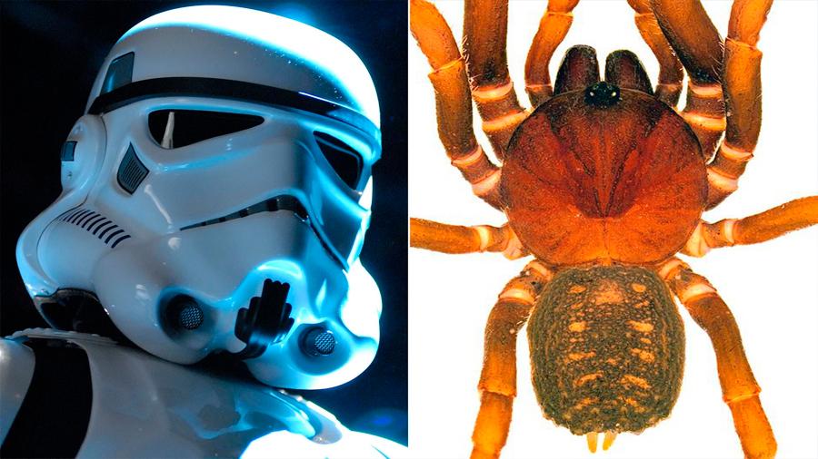 Las tropas de asalto de 'Star Wars' inspiran el nombre de nuevas arañas