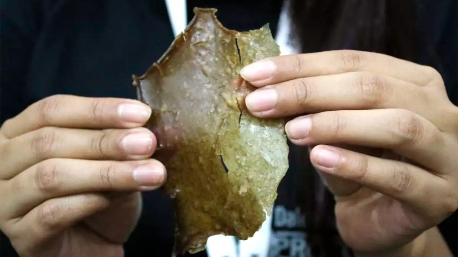 Estudiantes mexicanos crean plástico biodegradable con cáscara de mango