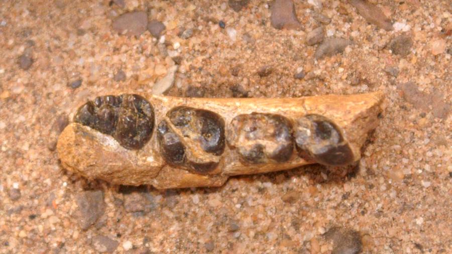 Ciencia: Encuentra eslabón perdido de hace 22 millones de años