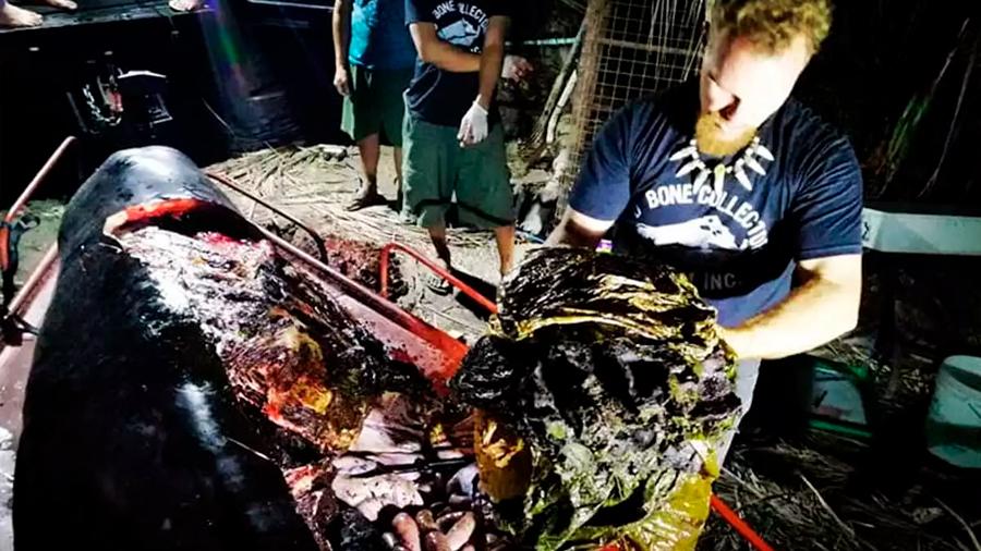 Ballena con 40 kg de plástico en su estómago muere en Filipinas