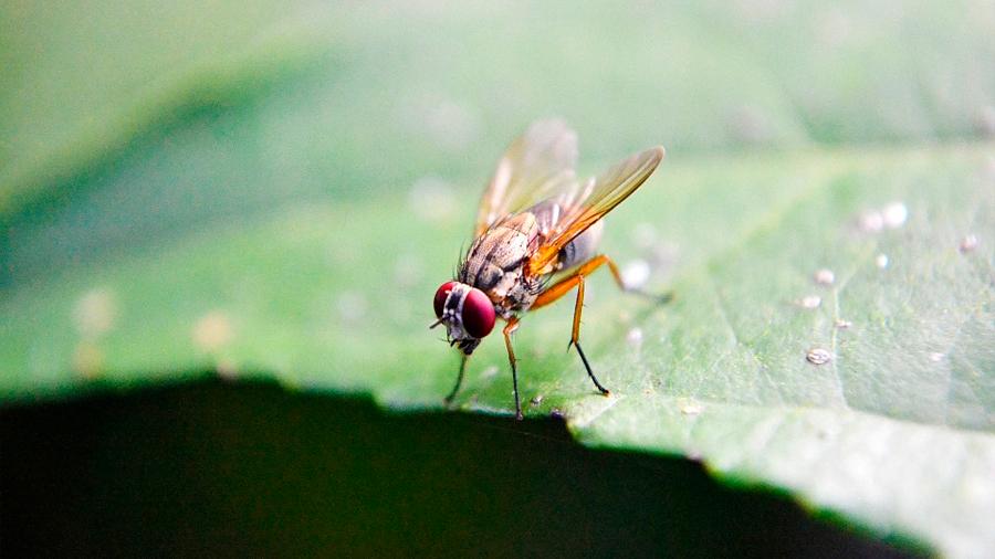 Identifican el circuito neuronal del comportamiento de los insectos