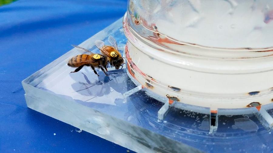 Logran descifrar el lenguaje de las abejas para ayudarlas a comer mejor