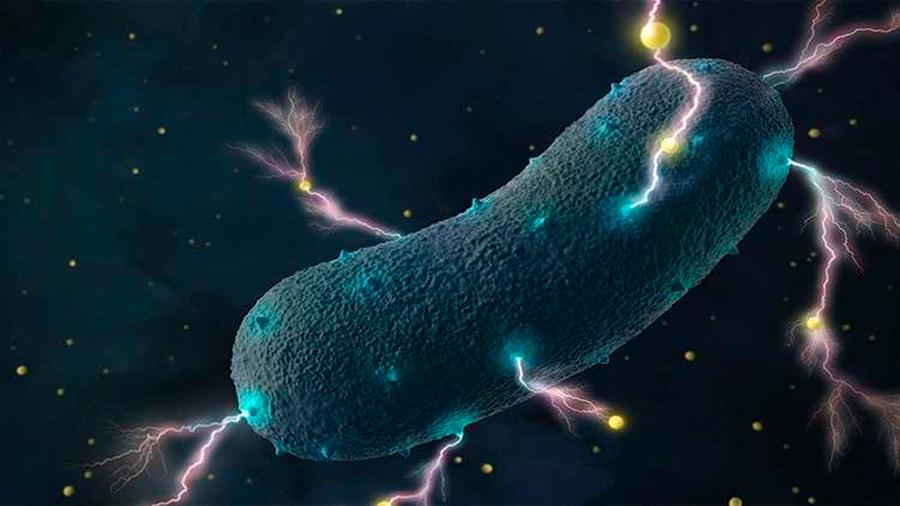 Logran transferir corriente eléctrica generada por bacterias