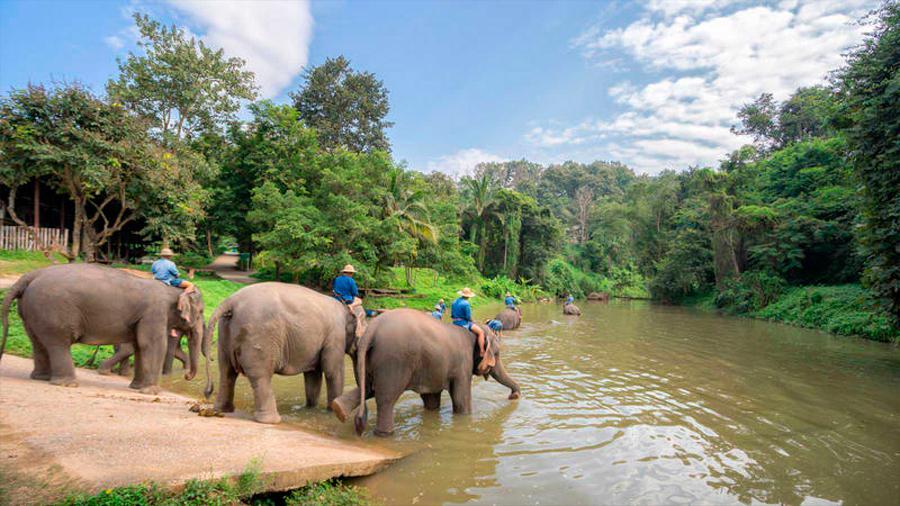 El futuro de los elefantes que viven en cautiverio pende de un hilo