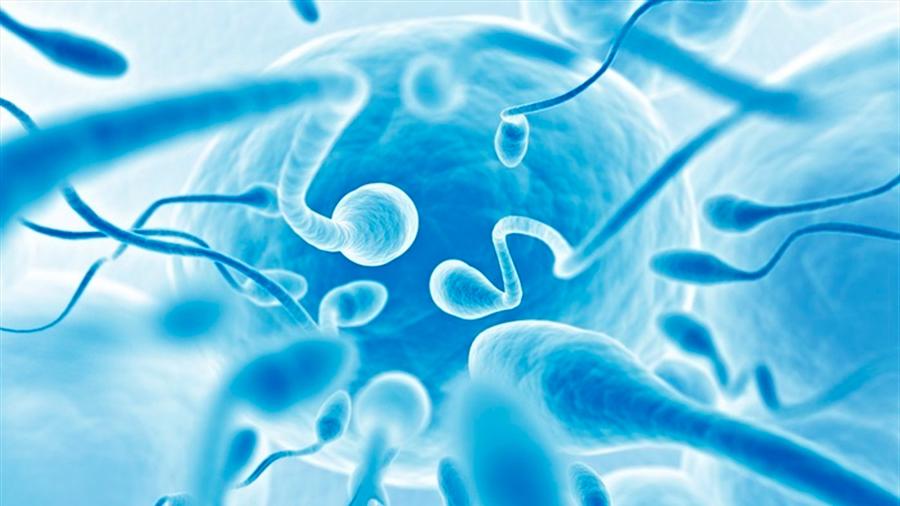 Hallan las raíces de la infertilidad masculina