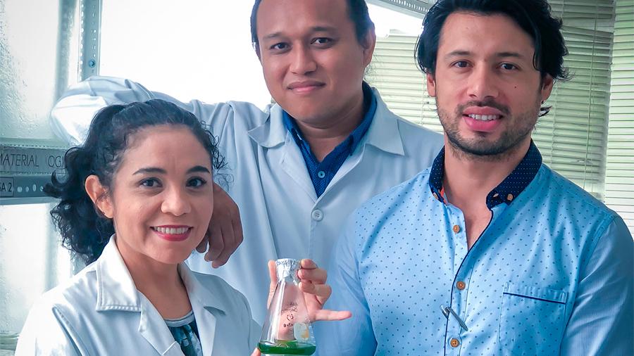Logran biotecnólogos mexicanos producir enzimas para alimentación animal, a partir de microalgas verdes