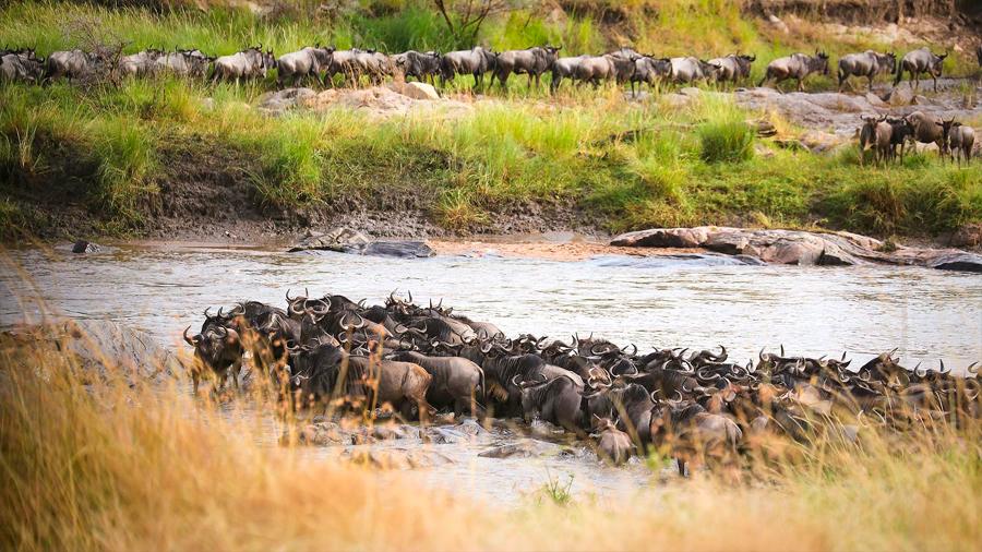 El icónico Serengeti-Mara, bajo la amenaza demográfica del ser humano