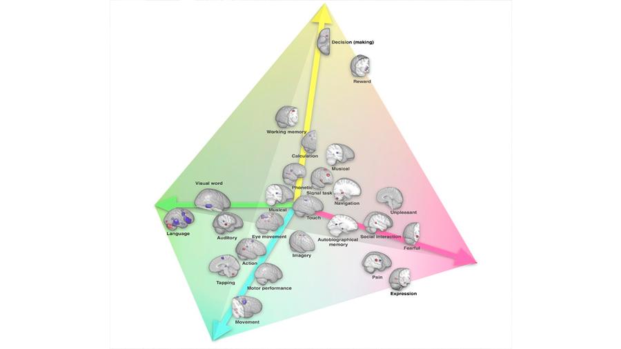 Crean el primer mapa de la lateralización cerebral